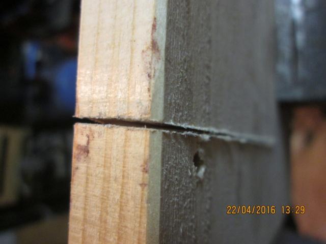Construction d'une fourmilière pour des crematogaster scutellaris. Img_7432