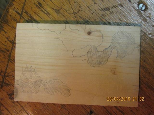 Construction d'une fourmilière pour des crematogaster scutellaris. Img_7441