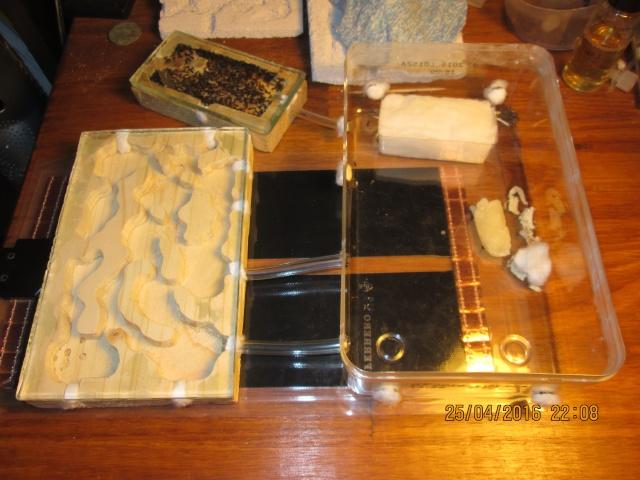 Construction d'une fourmilière pour des crematogaster scutellaris. Img_7516