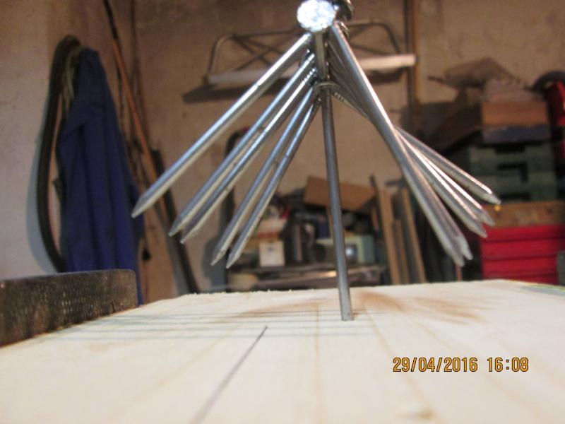 Construction d'une fourmilière pour des crematogaster scutellaris. Img_7526