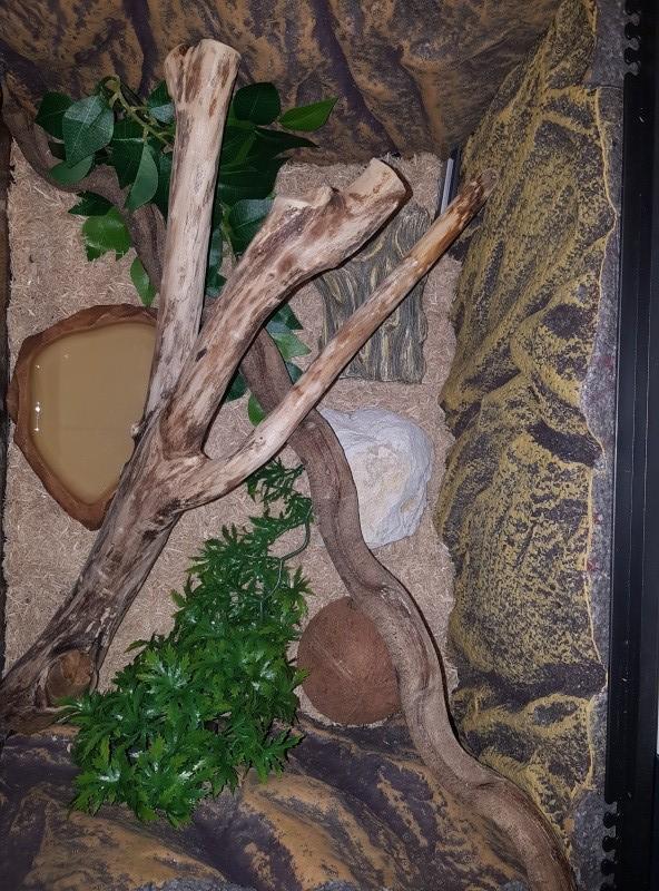 Terrarium pour pantherophis guttatus juvénile - Page 3 20160513