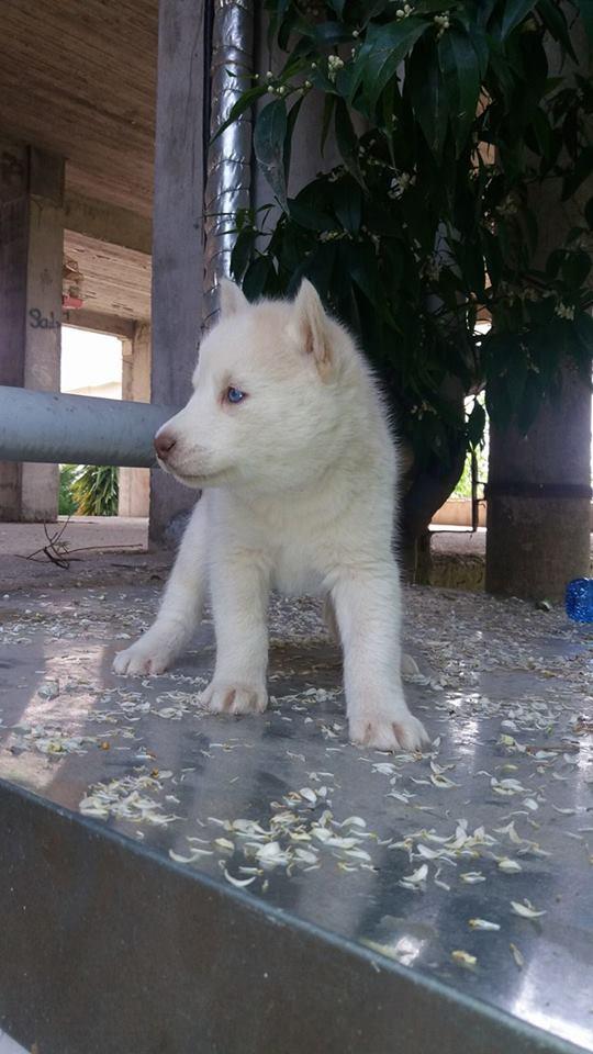 Hello From Greece  Husky12