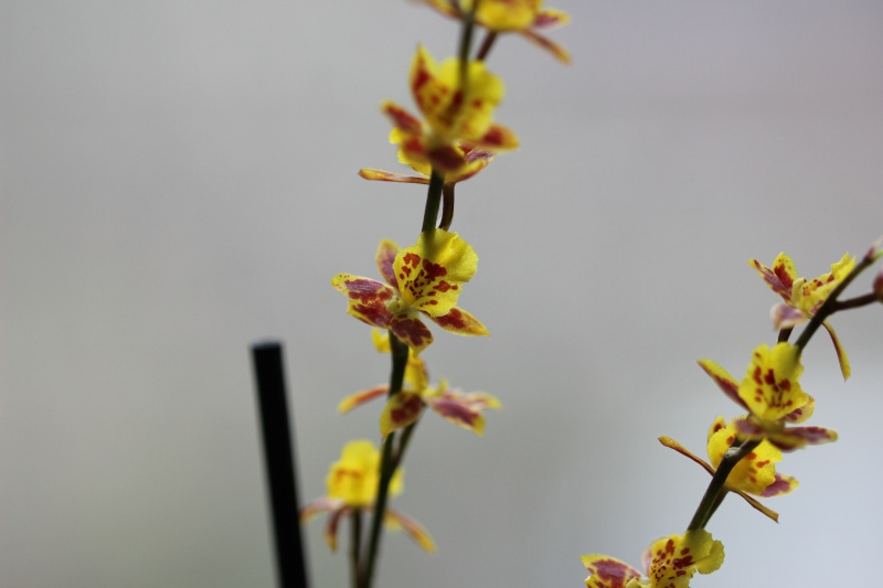 Hilfe bei geschenkter Orchidee Img_0512