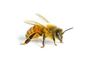 Пчеловодство на даче 13306910