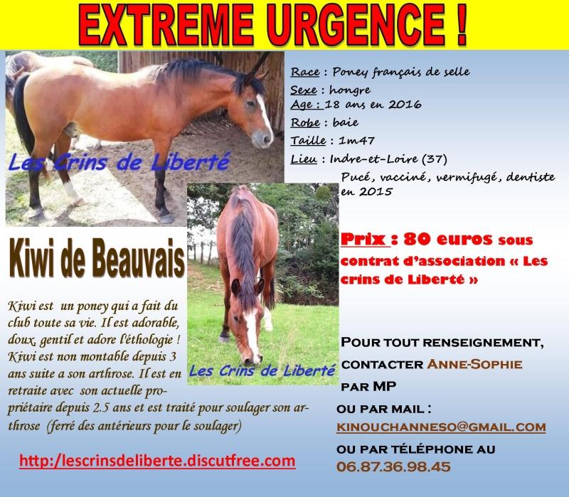 Dpt 37 - 18 ans - KIWI DE BEAUVAIS -PFS- adopté par Méline (2016) parti... Les_cr97