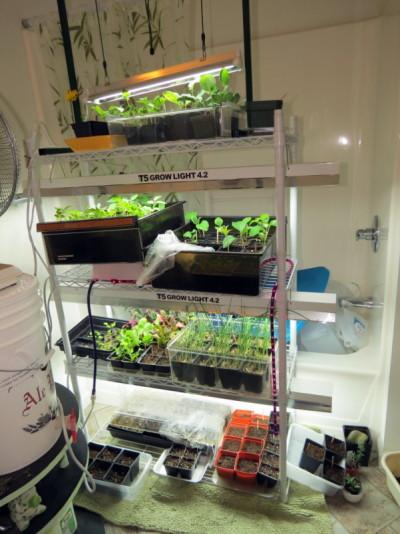 Mid-Atl - Mar 2016 - How do YOU start seeds? Growli11