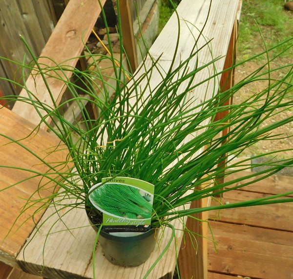 May: What to plant in Northern California and Central Valley areas Chives10