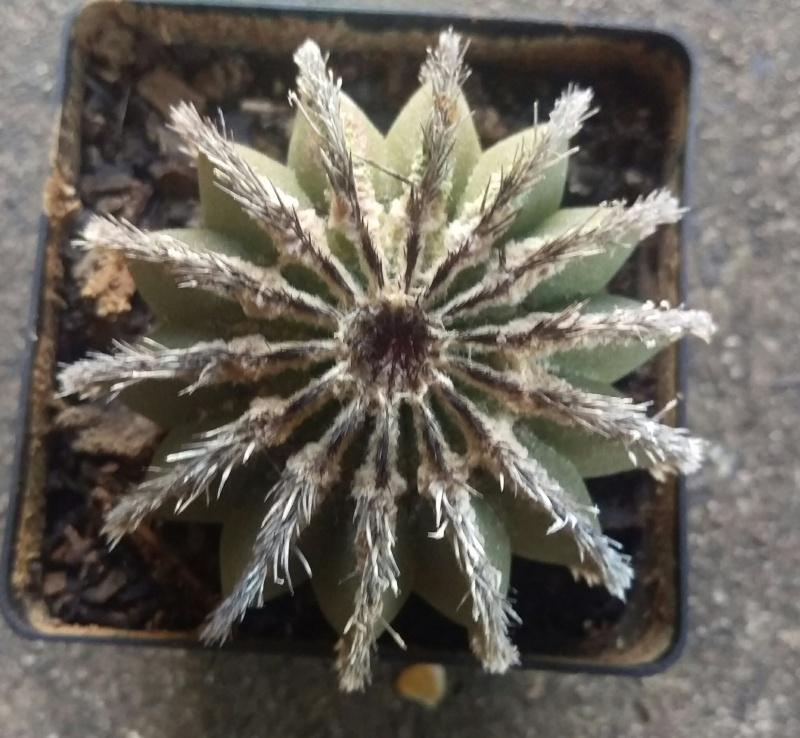 Plant ID's Imag1614