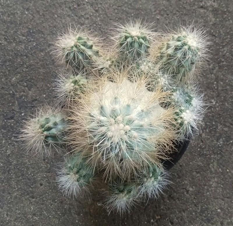 Plant ID's Imag1616
