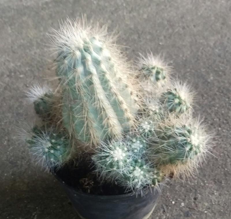 Plant ID's Imag1617