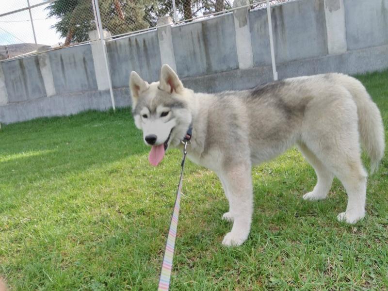 Husky size 13010110