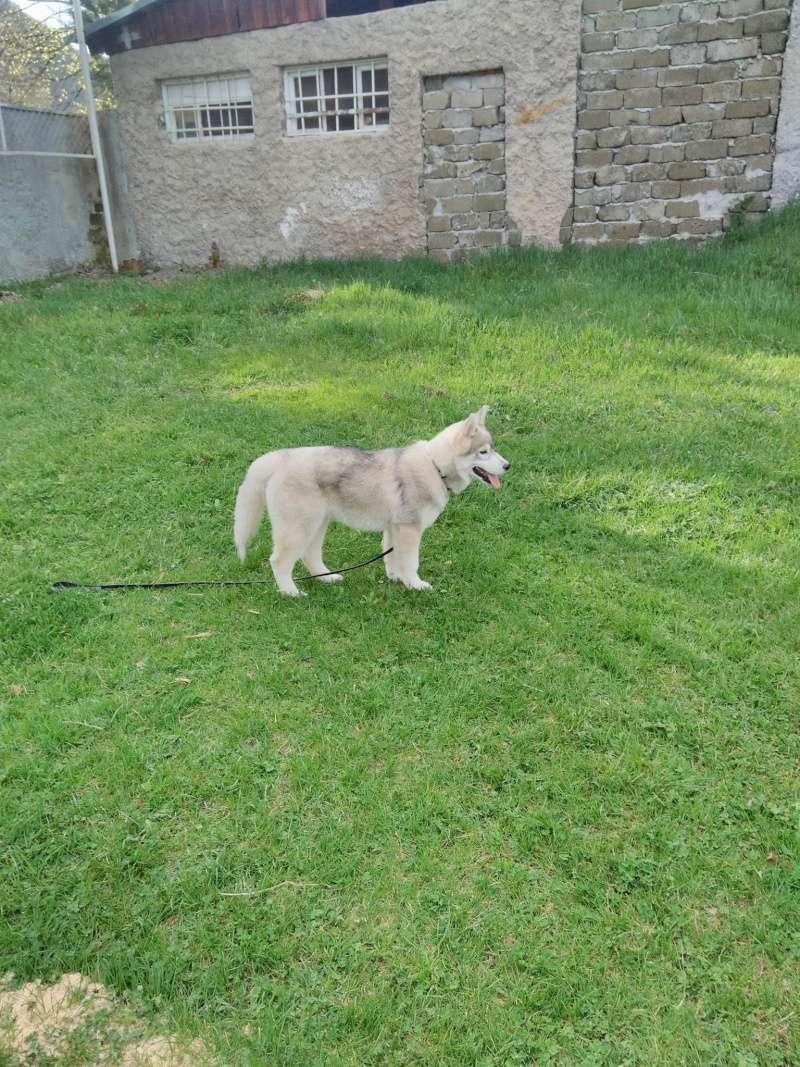 Husky size 13035610