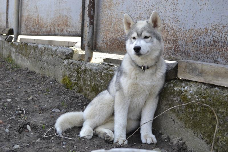 Husky size Img_1610