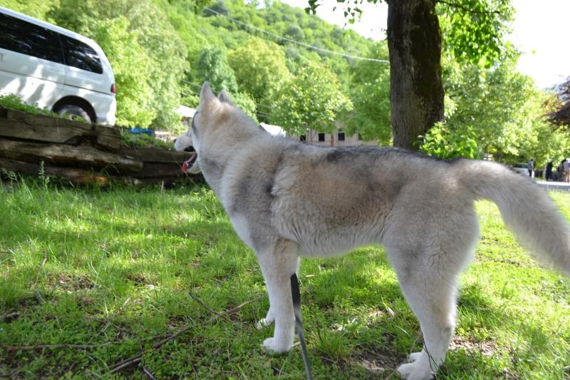 Husky size Img_2215