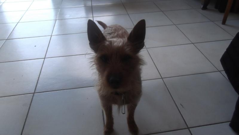 mon chien Sahel Dscf1410