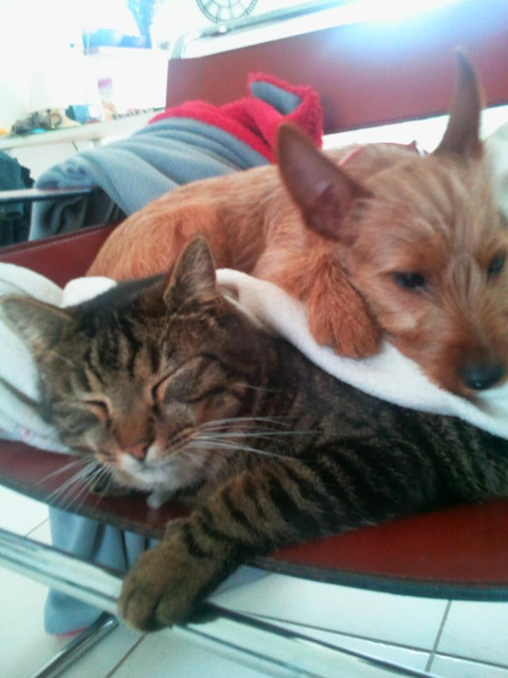 s'entendre comme chien et chat Solisa10