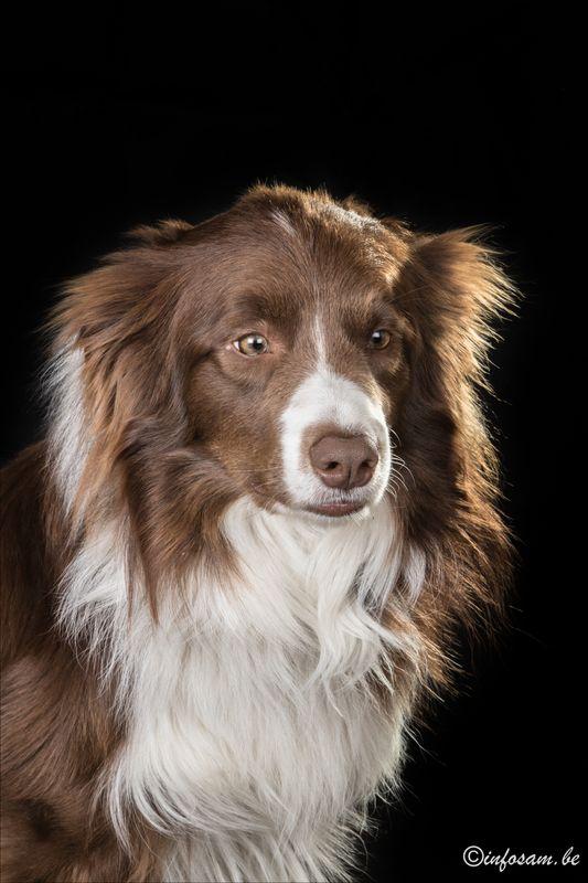 Mon chien Nash Img_0411