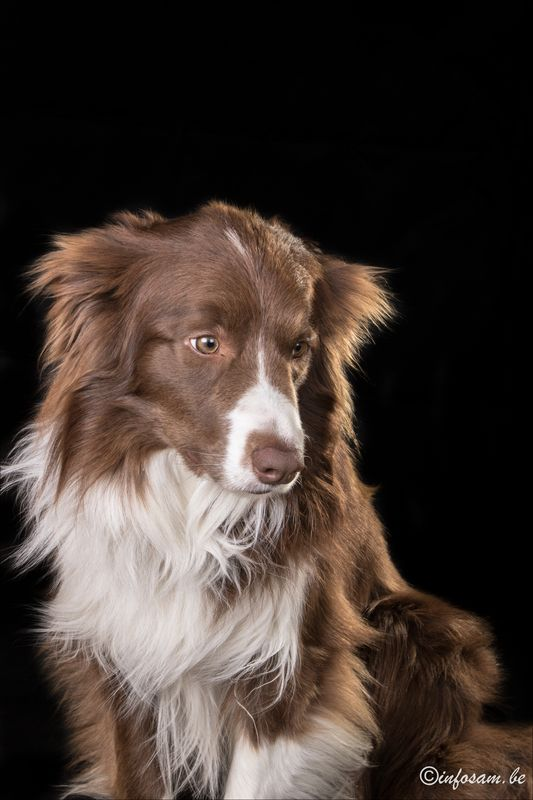 Mon chien Nash Img_0412