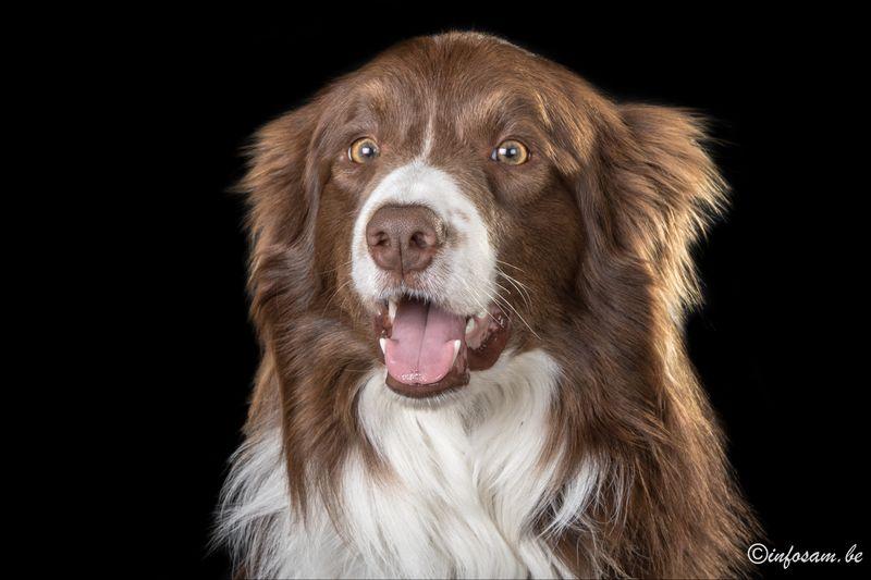 Mon chien Nash Img_0413