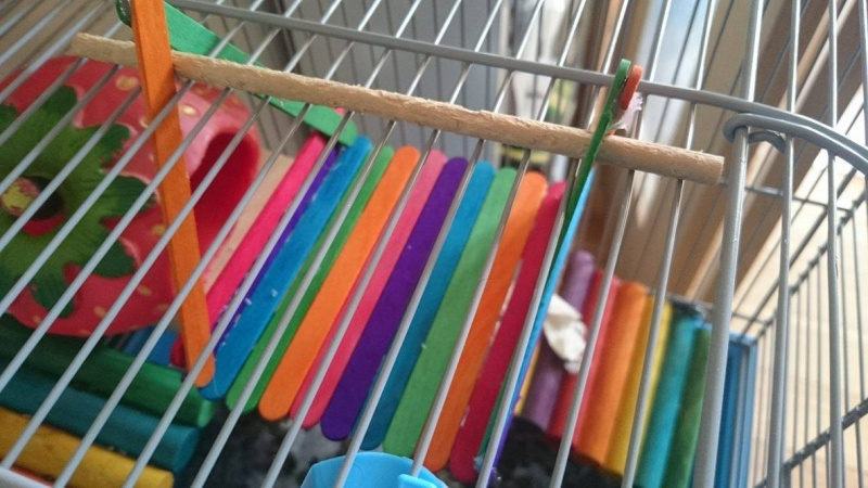 Homemade Popsicle Stick Toys 13072010