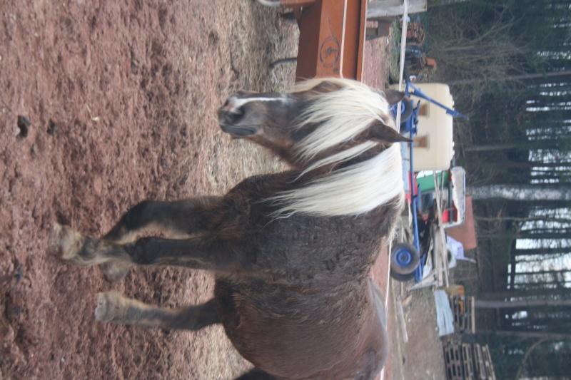 Photos cheval Img_1710