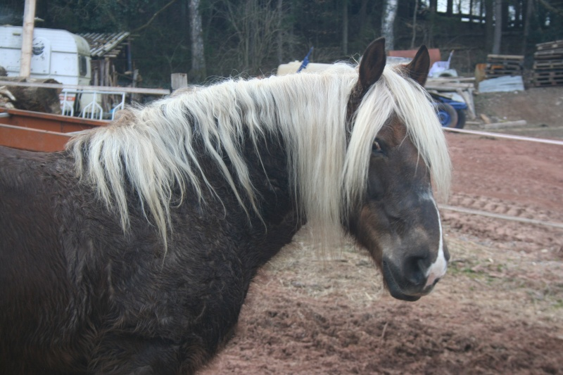 Photos cheval Img_1711