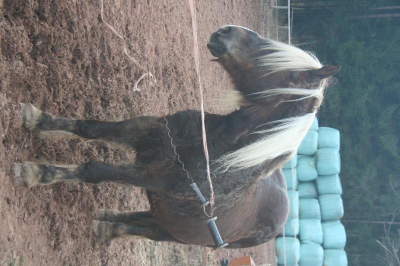 Photos cheval Img_1712
