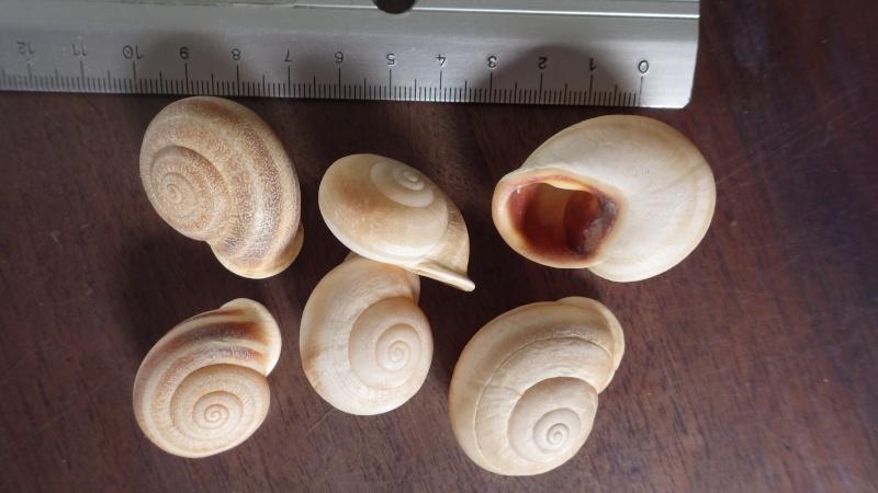 Petit coquillage du Maroc. Imgp4210
