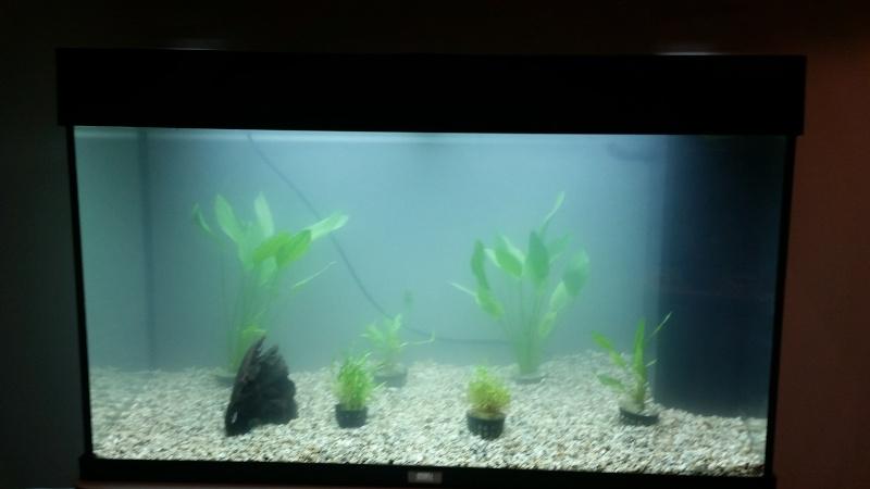 mon premier aquarium juwel rio 125 20160411