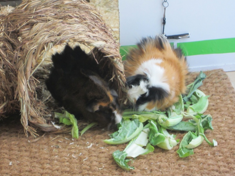 "Food for ""my"" guinea pigs Dez_1412"