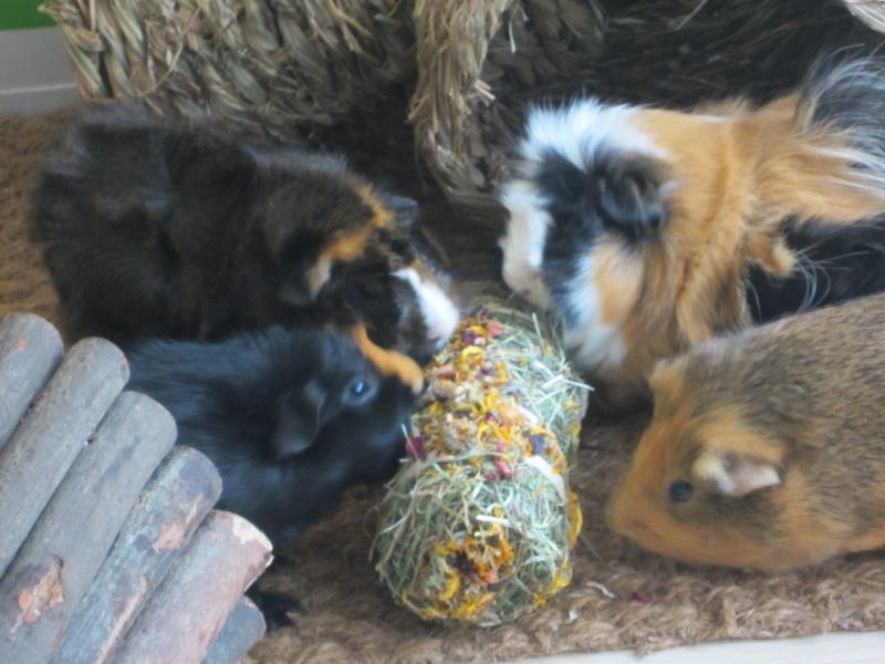 "Food for ""my"" guinea pigs Februa13"