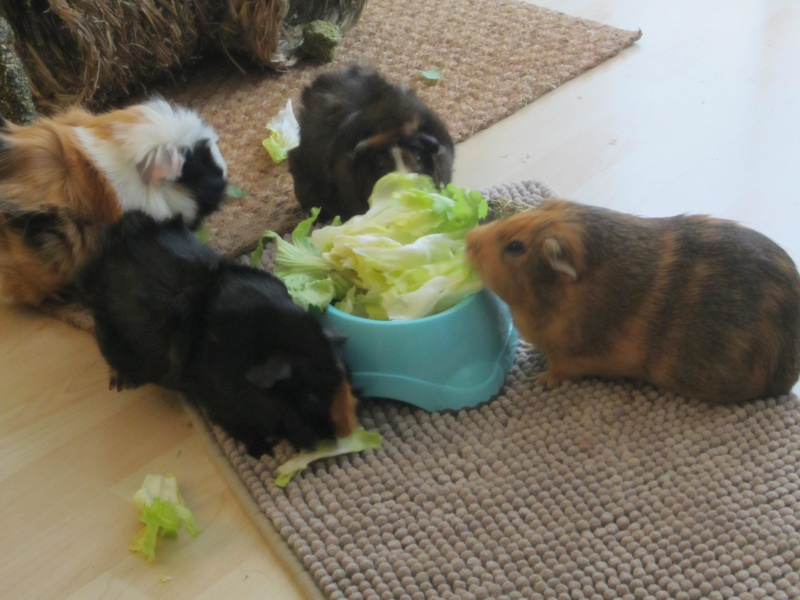 "Food for ""my"" guinea pigs Jan_1515"