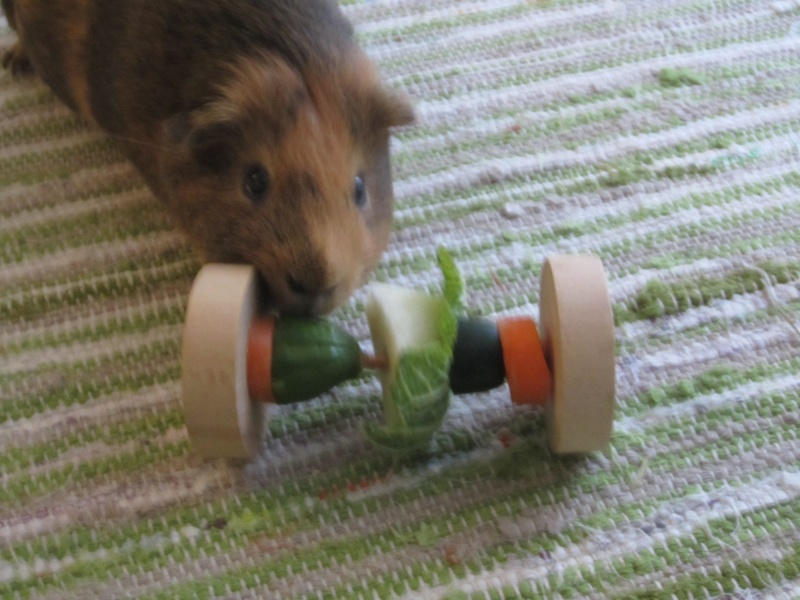 """Food for """"my"""" guinea pigs Pumba_12"""