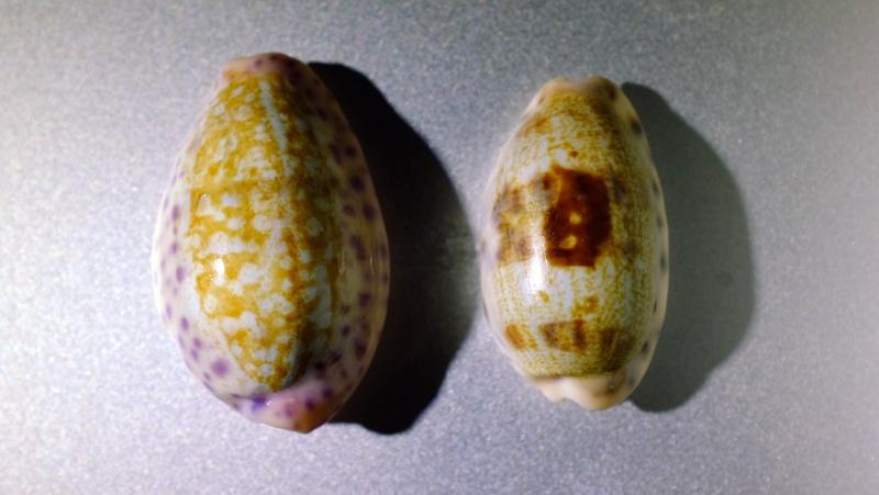 Deux porcelaines de Nouvelle-Calédonie Beno0210