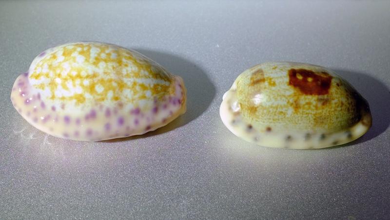 Deux porcelaines de Nouvelle-Calédonie Beno0211