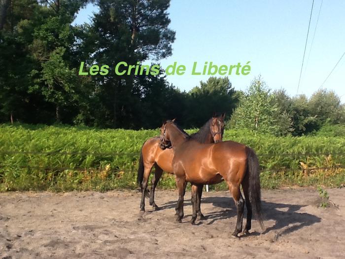 Dpt 33, 20 et 19 ans, Hannibal et Idéal, AA hongres pour RETRAITE, contact Cécile - Page 2 Ideal_11