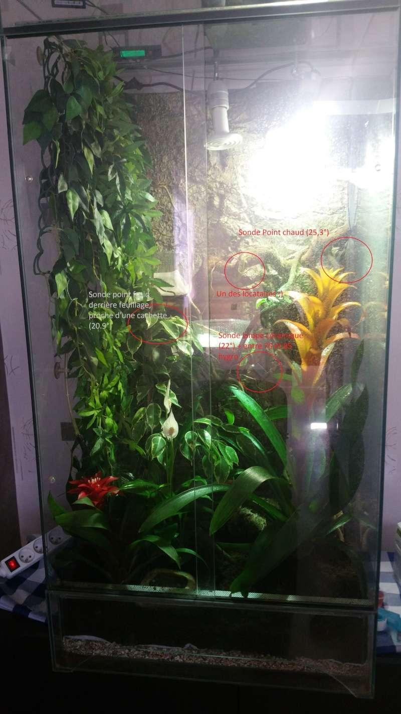 [Conseils] Premier terrarium naturel phelsuma grandis 20160510