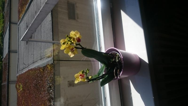 Was habe ich für eine Orchidee? Habe sie geschenkt bekommen. Img-2010