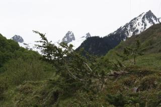 Hautes Pyrénées  12520110