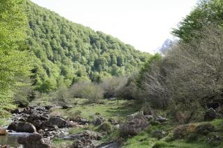 Hautes Pyrénées  12520114