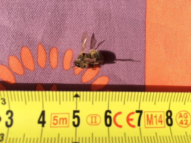 Guêpes ou abeilles ? Img_2613