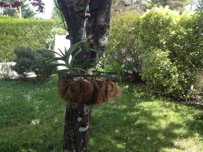 Paniers de coco Img_1521