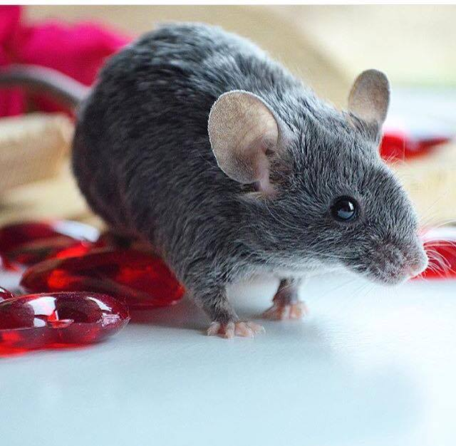 Hello from a mouse lover :) 12769310