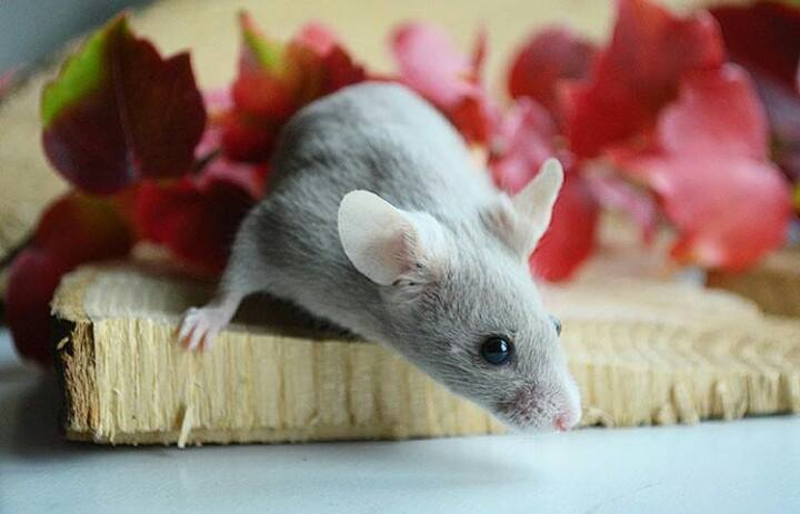 Hello from a mouse lover :) 13162410