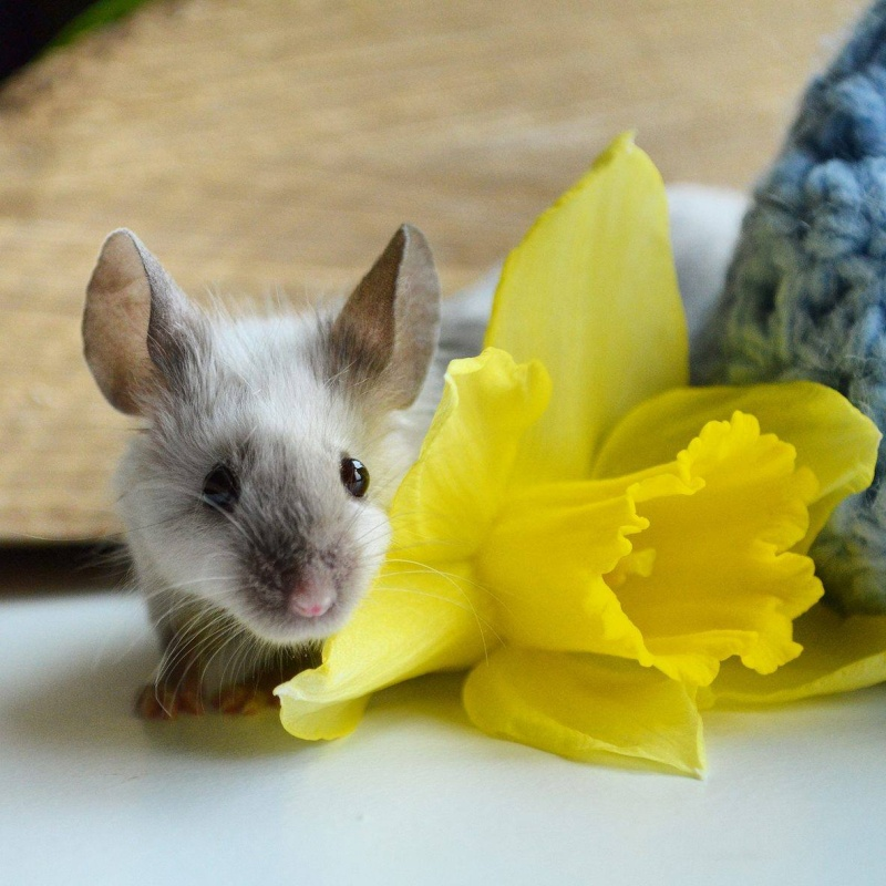 Hello from a mouse lover :) 13199210