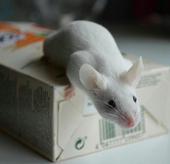 Hello from a mouse lover :) 13219910