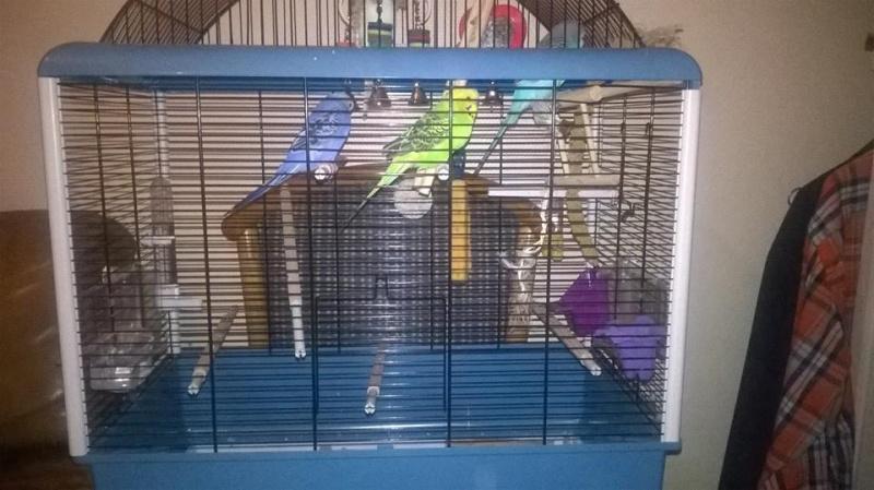Mâles ou femelles? Cage10
