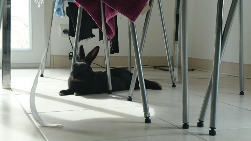PETIT MARCEL bébé lapin mâle - Page 4 Dsc_1322