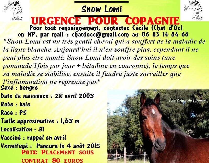 Dp 31, 13 ans, Snow Lomi, PS, hongre, contact Cécile (Chat d'Oc) 1912