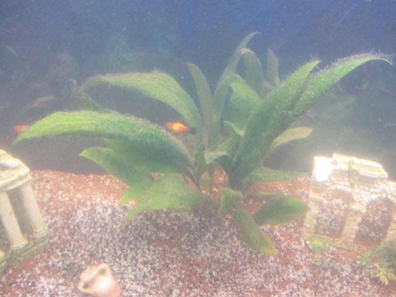 plantes avec saletés, algues? Img_2111